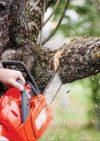 Touchwood Tree Surgery
