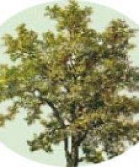 Chris Lewis Trees & Gardens